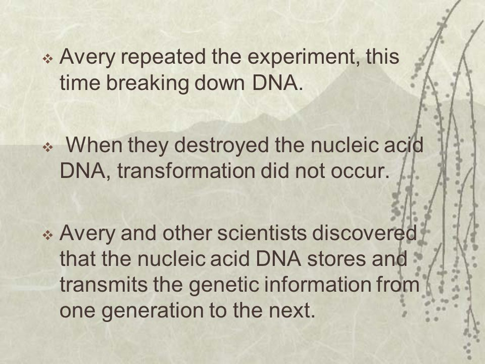 Avery repeated the experiment, this time breaking down DNA.