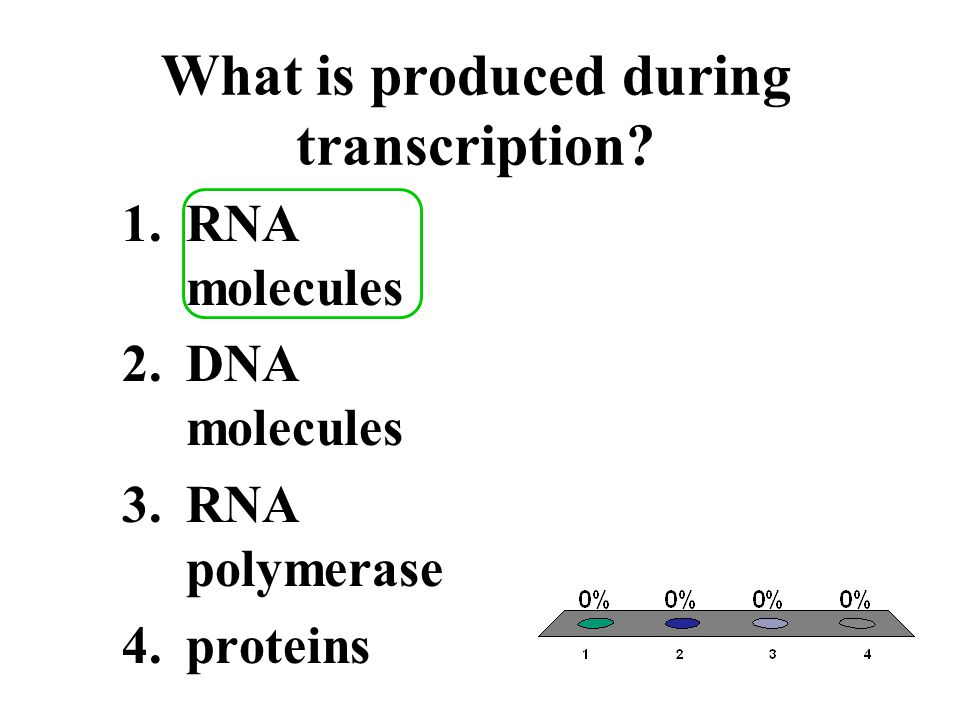 What is produced during transcription