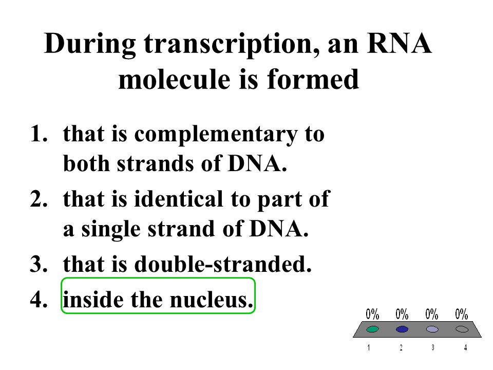 During transcription, an RNA molecule is formed