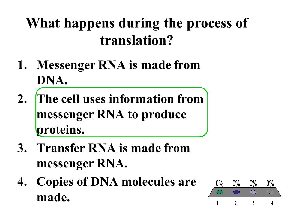 What happens during the process of translation
