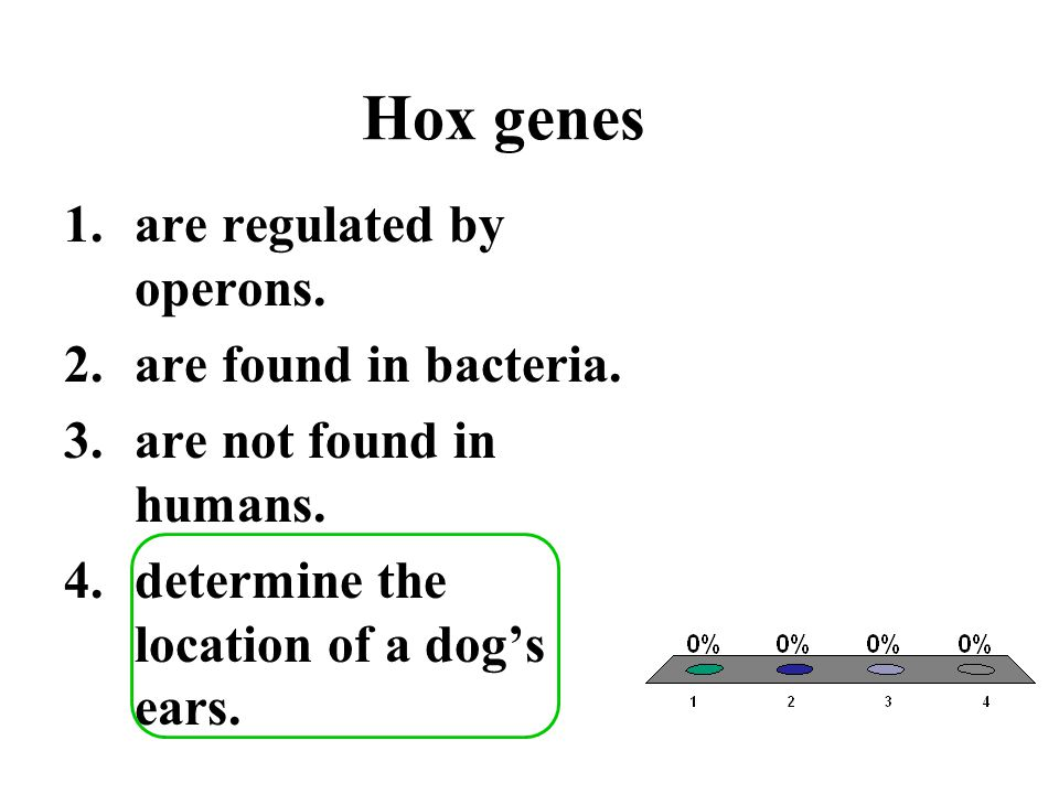 Hox genes are regulated by operons. are found in bacteria.