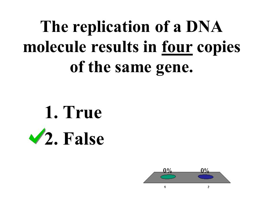 The replication of a DNA molecule results in four copies of the same gene.