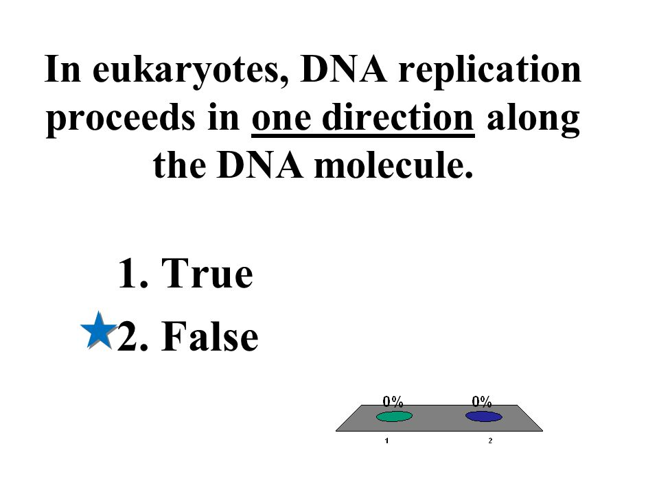In eukaryotes, DNA replication proceeds in one direction along the DNA molecule.