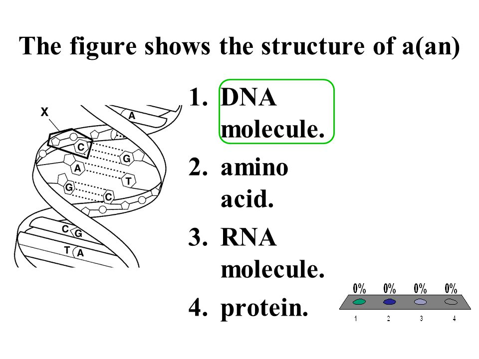 The figure shows the structure of a(an)