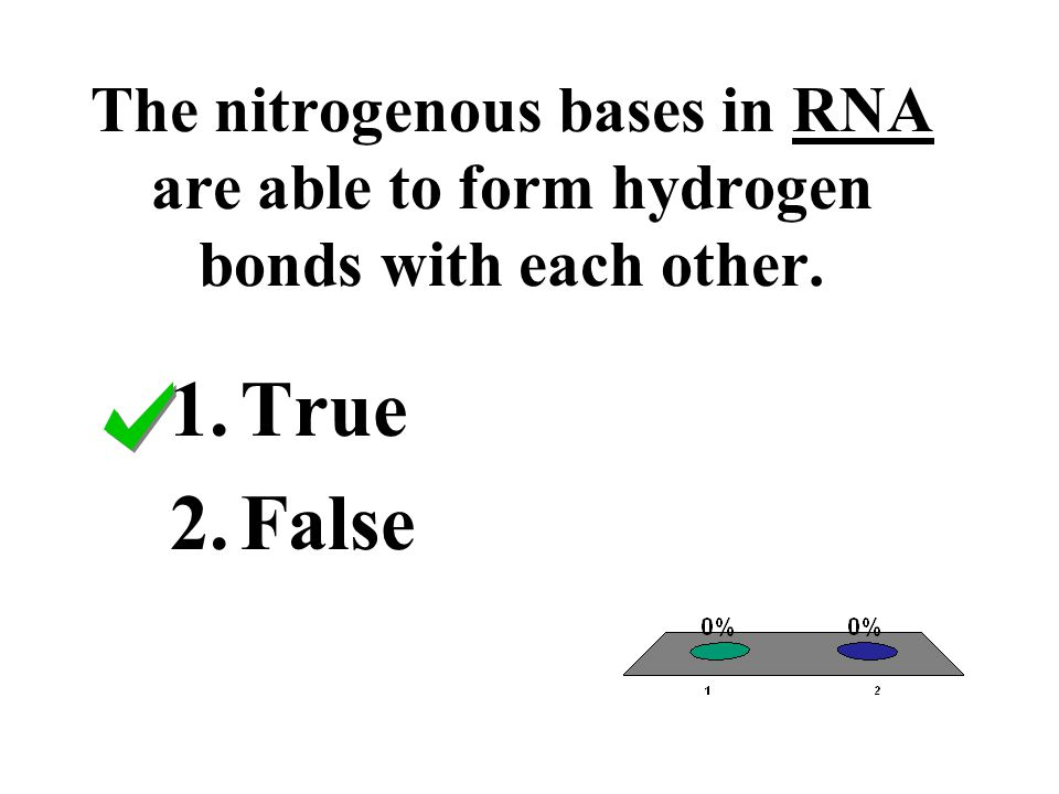 The nitrogenous bases in RNA are able to form hydrogen bonds with each other.