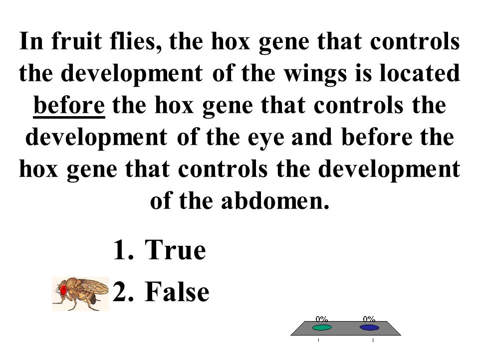 In fruit flies, the hox gene that controls the development of the wings is located before the hox gene that controls the development of the eye and before the hox gene that controls the development of the abdomen.