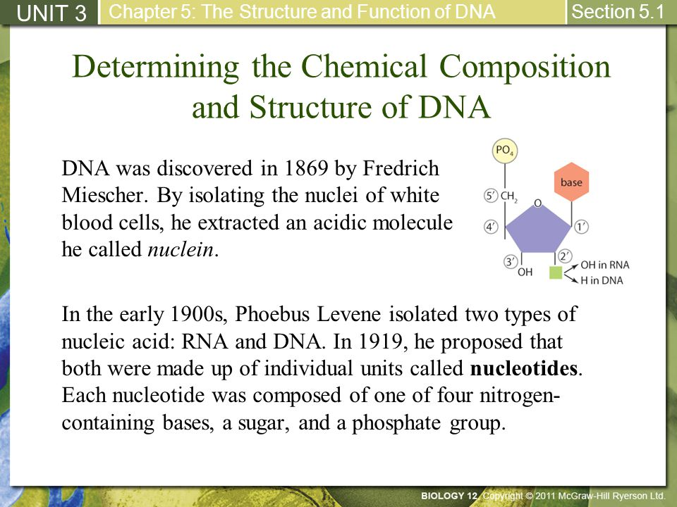 Determining the Chemical Composition and Structure of DNA