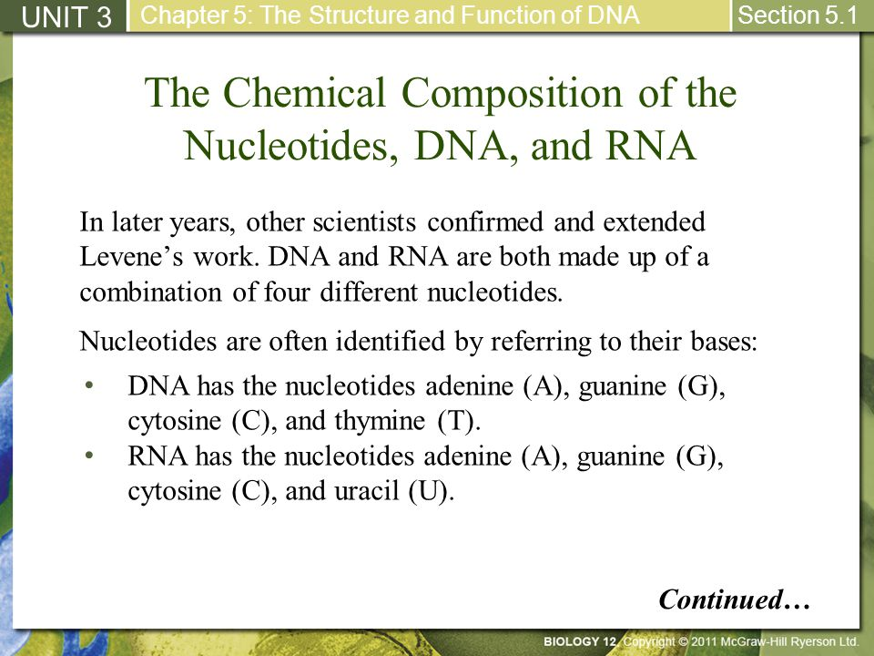 The Chemical Composition of the Nucleotides, DNA, and RNA