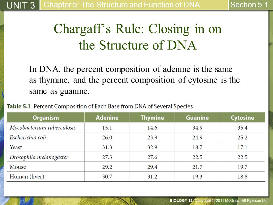Chargaff's Rule: Closing in on the Structure of DNA