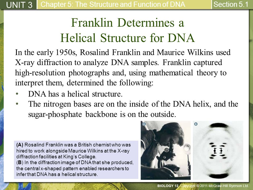 Franklin Determines a Helical Structure for DNA