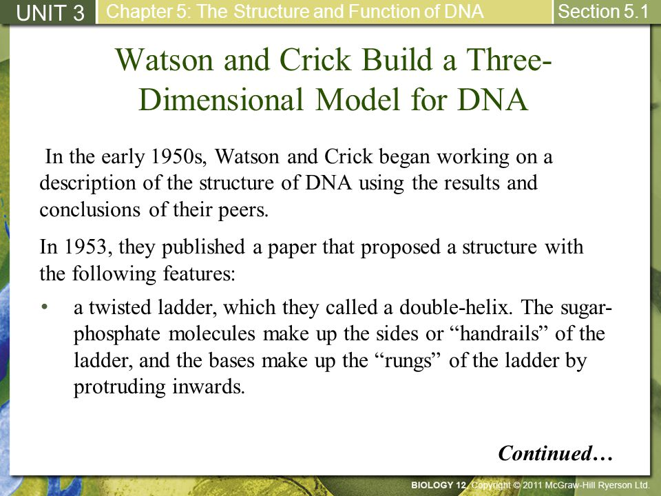 Watson and Crick Build a Three-Dimensional Model for DNA