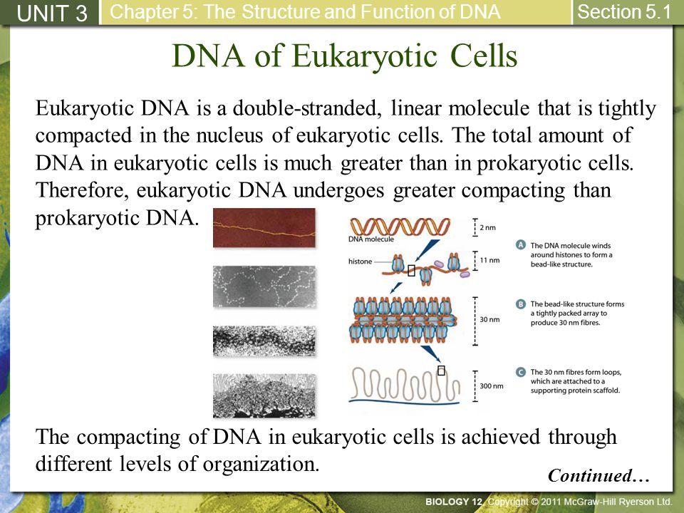 DNA of Eukaryotic Cells