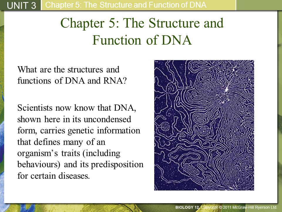Chapter 5: The Structure and Function of DNA