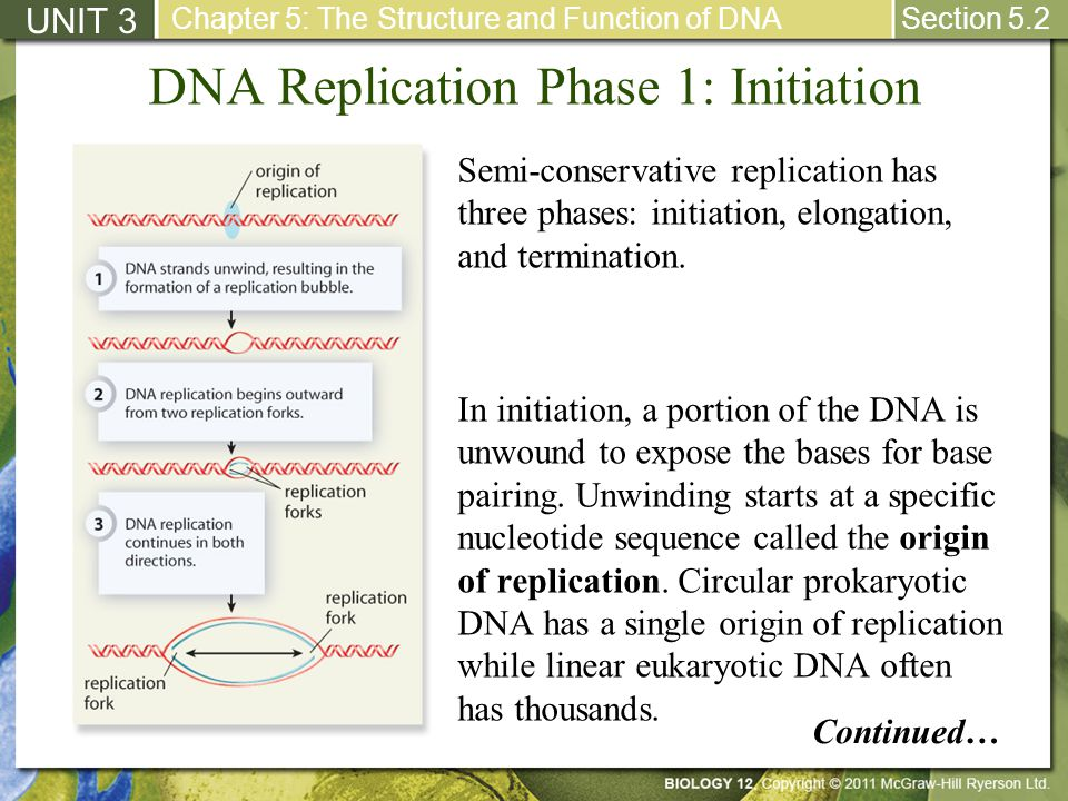 DNA Replication Phase 1: Initiation