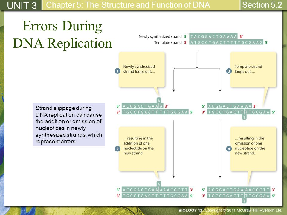 errors in dna replication essay Random errors: errors caused by unknown and unpredictable changes in a measurement, either due to measuring instruments or environmental conditions.