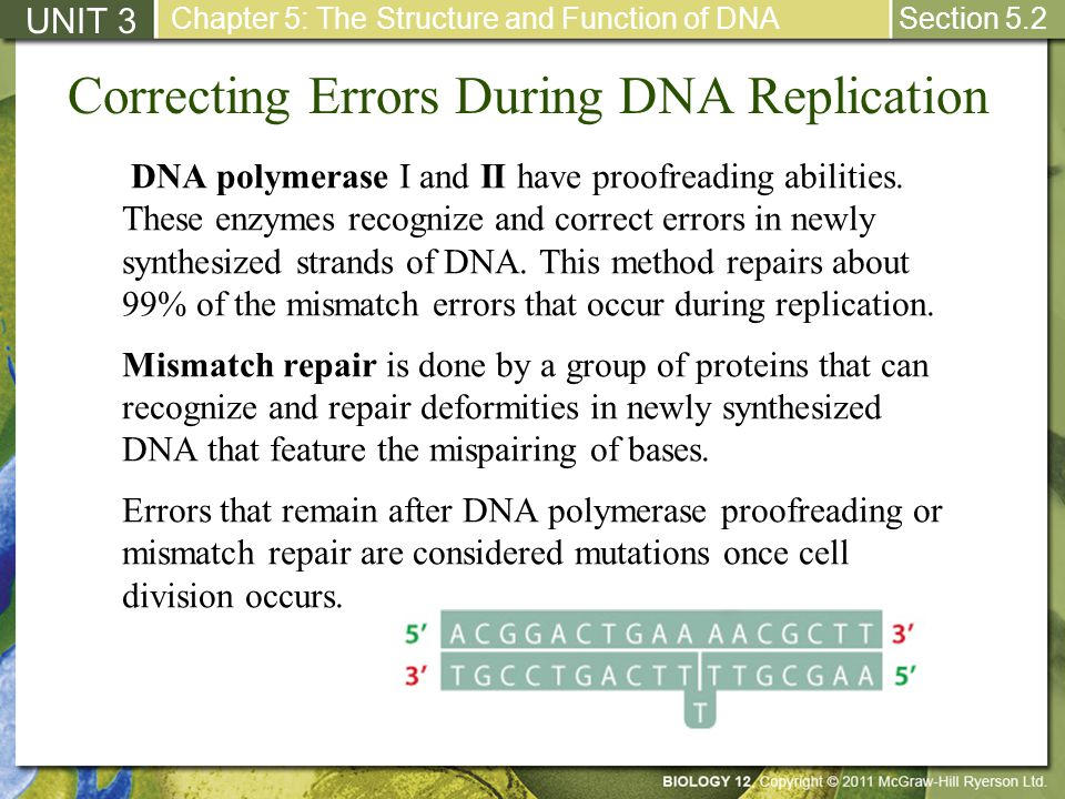 Correcting Errors During DNA Replication