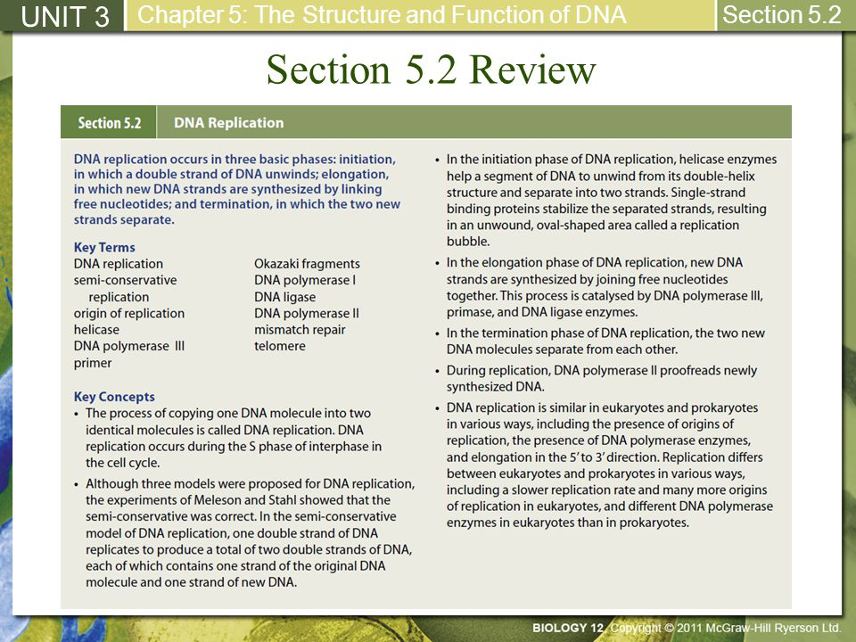 Section 5.2 Review UNIT 3 Chapter 5: The Structure and Function of DNA