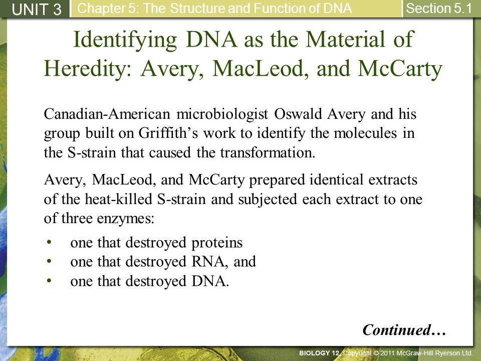 UNIT 3 Chapter 5: The Structure and Function of DNA. Section 5.1. Identifying DNA as the Material of Heredity: Avery, MacLeod, and McCarty.