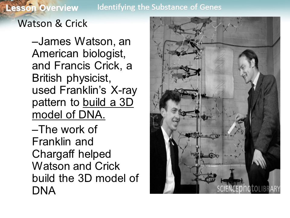 Watson & Crick James Watson, an American biologist, and Francis Crick, a British physicist, used Franklin's X-ray pattern to build a 3D model of DNA.