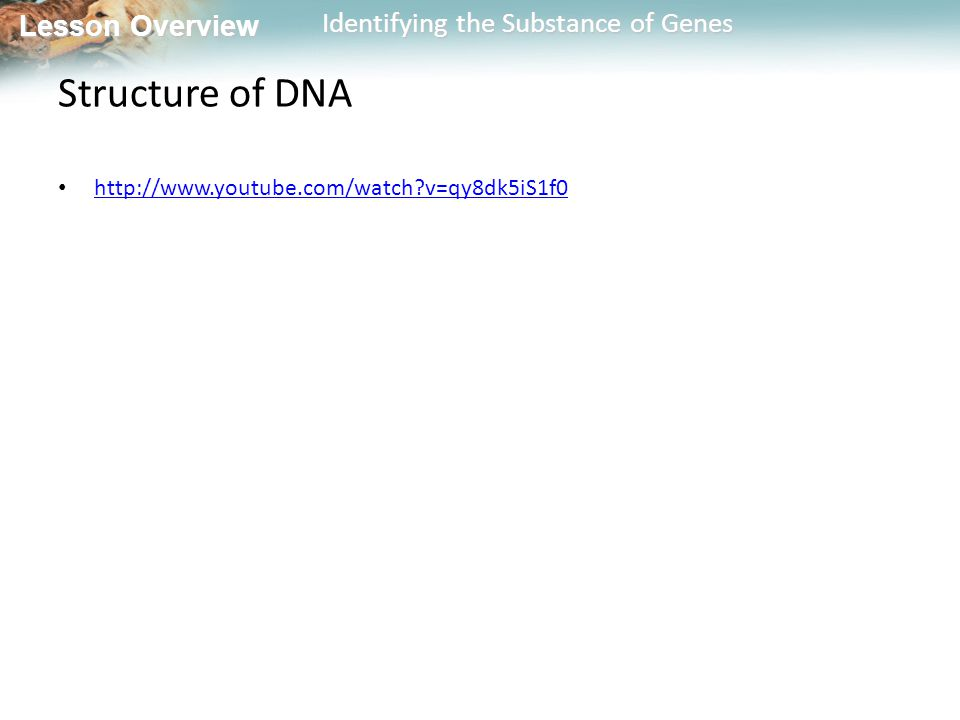 Structure of DNA http://www.youtube.com/watch v=qy8dk5iS1f0