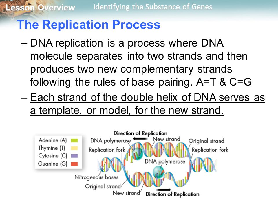 The Replication Process