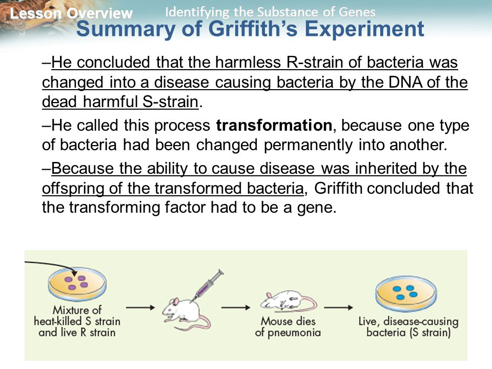 Summary of Griffith's Experiment
