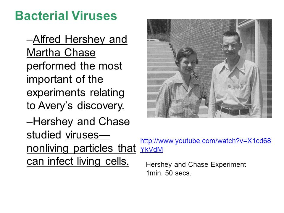 Bacterial Viruses Alfred Hershey and Martha Chase performed the most important of the experiments relating to Avery's discovery.