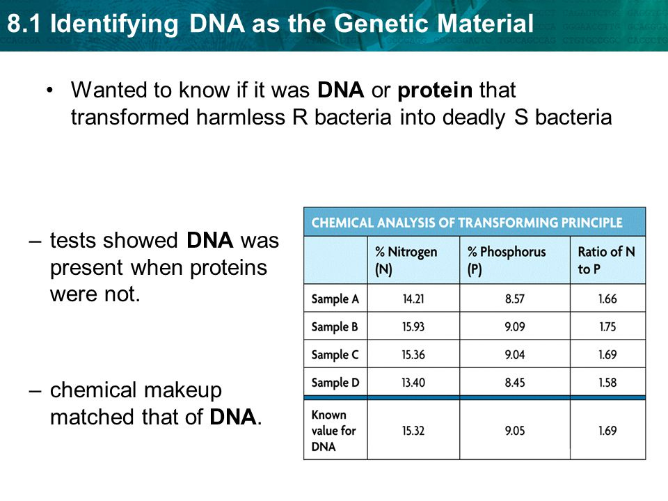 Wanted to know if it was DNA or protein that transformed harmless R bacteria into deadly S bacteria