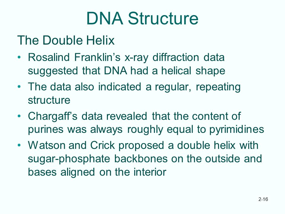 DNA Structure The Double Helix