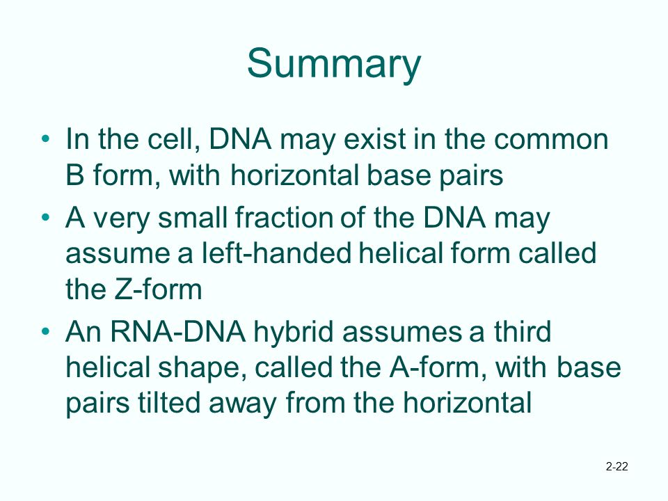Summary In the cell, DNA may exist in the common B form, with horizontal base pairs.