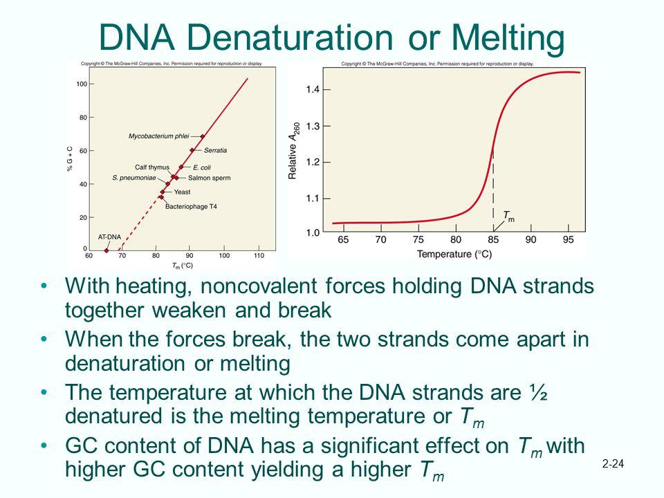 DNA Denaturation or Melting