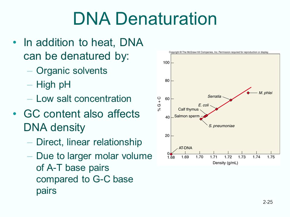 DNA Denaturation In addition to heat, DNA can be denatured by: