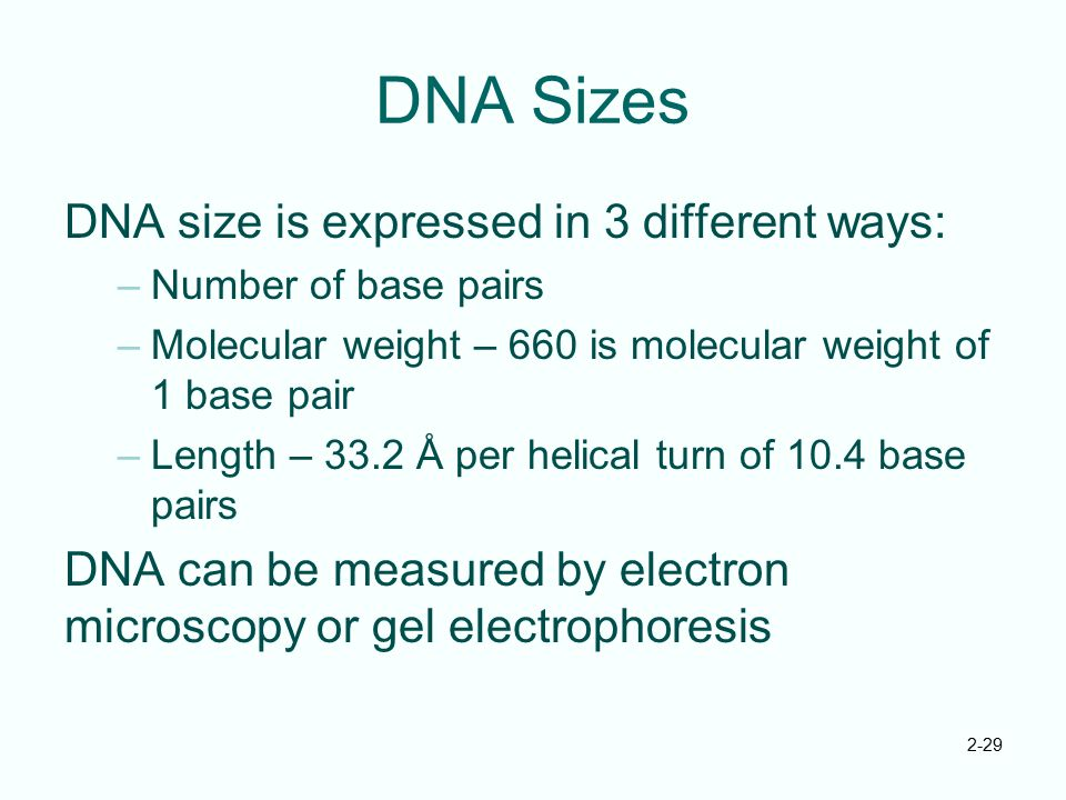 DNA Sizes DNA size is expressed in 3 different ways: