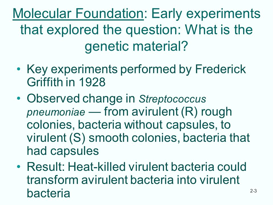 Molecular Foundation: Early experiments that explored the question: What is the genetic material
