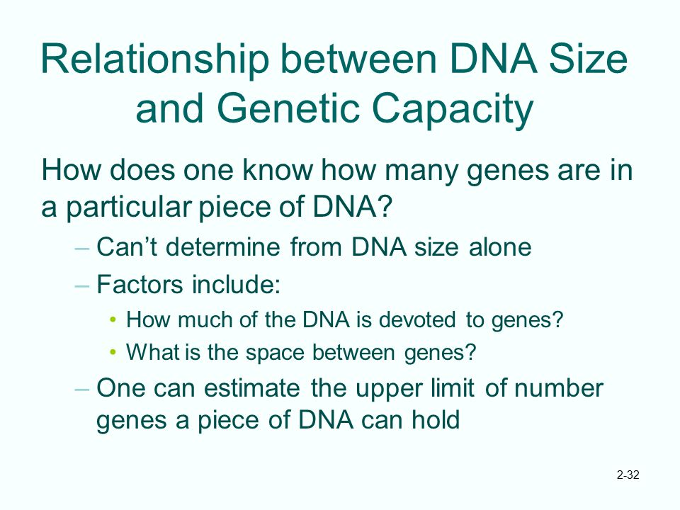 Relationship between DNA Size and Genetic Capacity