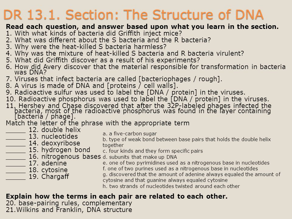 DR 13.1. Section: The Structure of DNA
