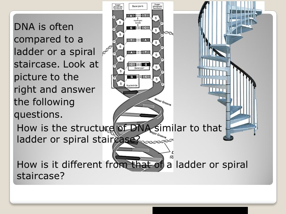 DNA is often compared to a ladder or a spiral staircase