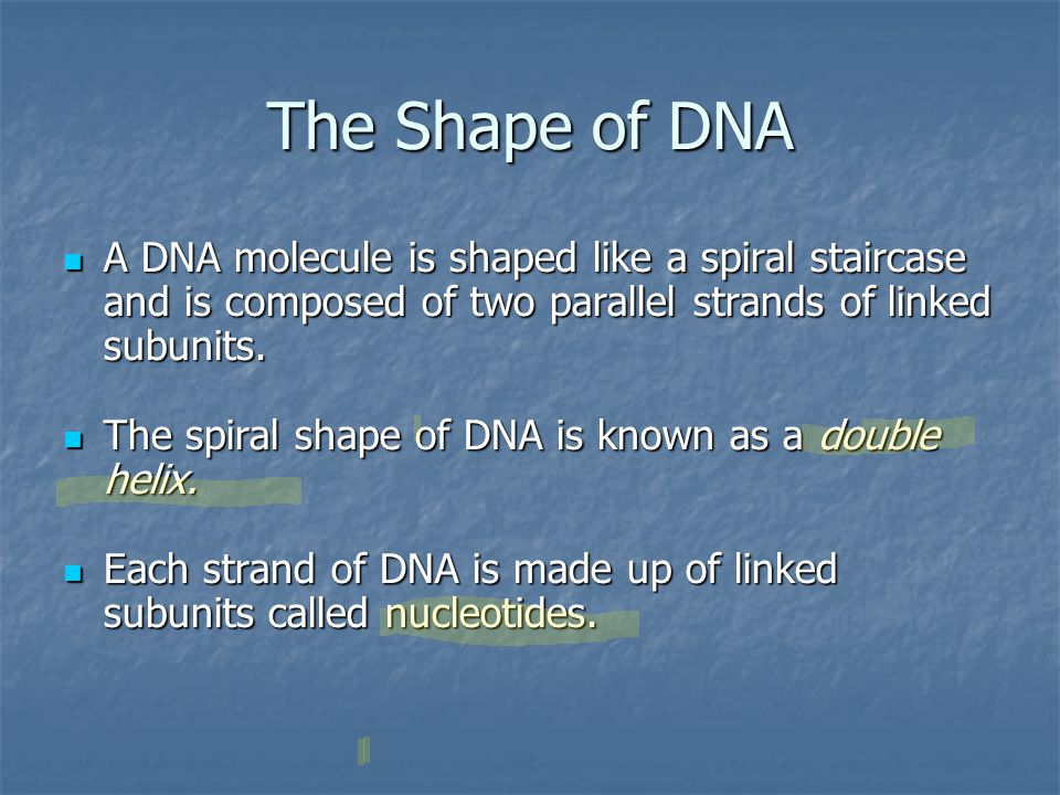 The Shape of DNA A DNA molecule is shaped like a spiral staircase and is composed of two parallel strands of linked subunits.