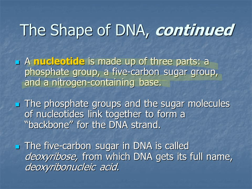 The Shape of DNA, continued