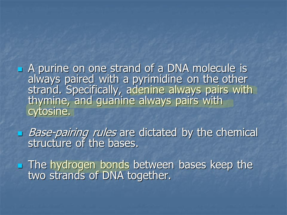 A purine on one strand of a DNA molecule is always paired with a pyrimidine on the other strand. Specifically, adenine always pairs with thymine, and guanine always pairs with cytosine.
