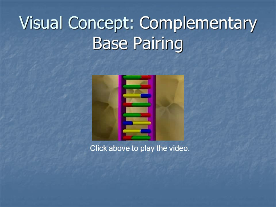 Visual Concept: Complementary Base Pairing