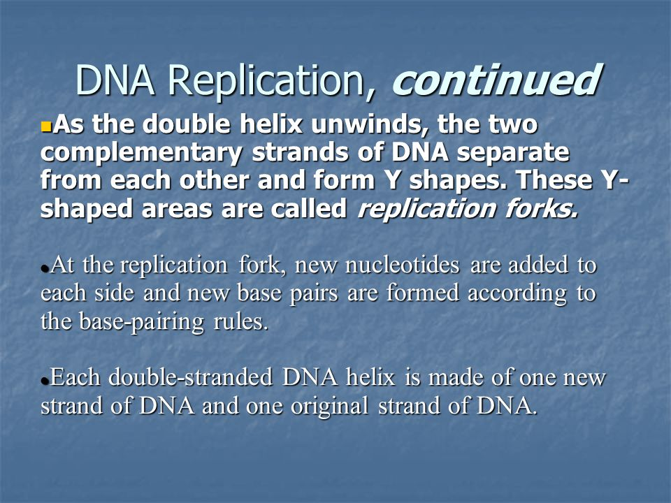 DNA Replication, continued