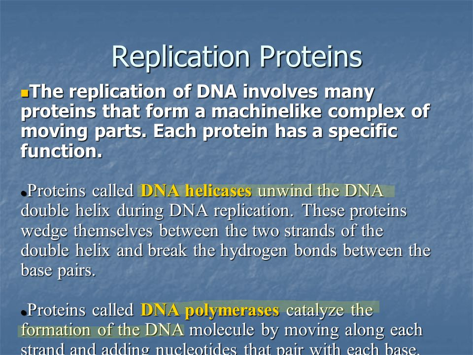 Replication Proteins