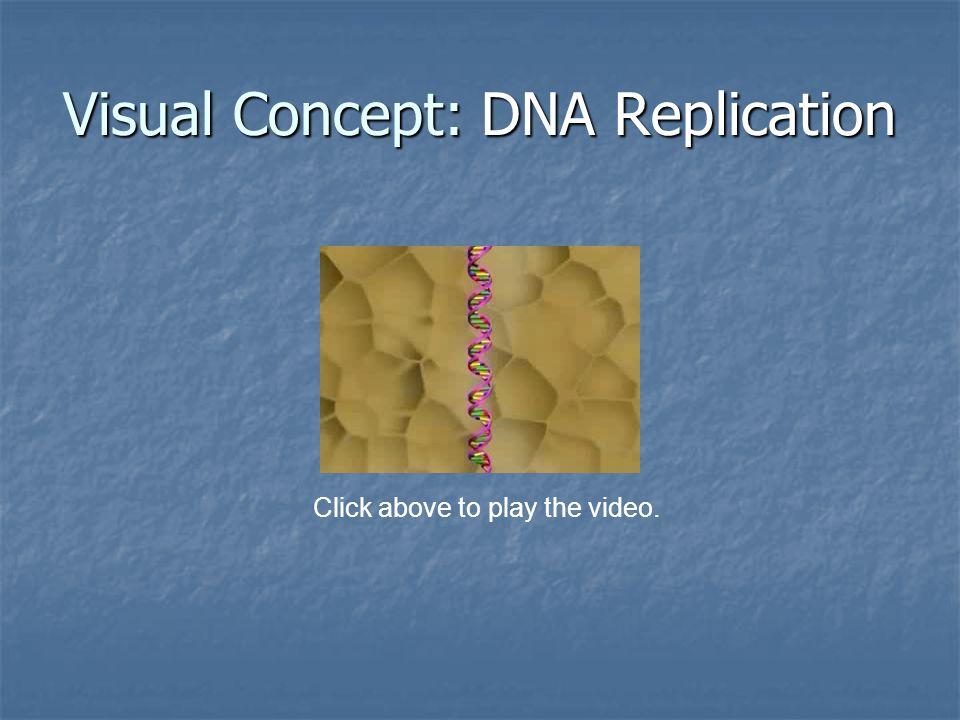 Visual Concept: DNA Replication