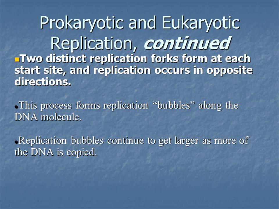 Prokaryotic and Eukaryotic Replication, continued