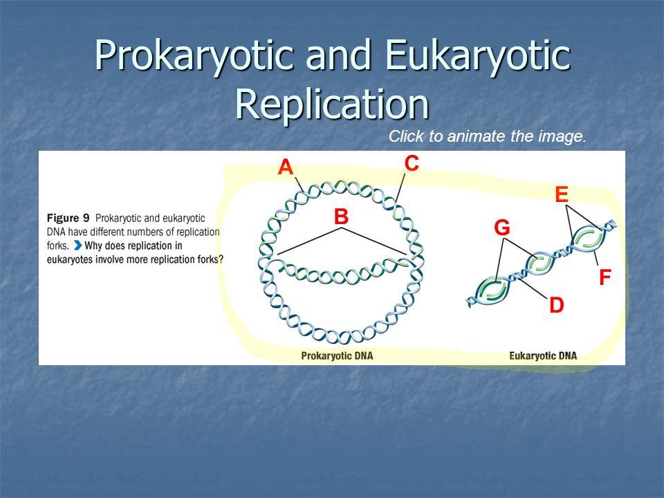 Prokaryotic and Eukaryotic Replication