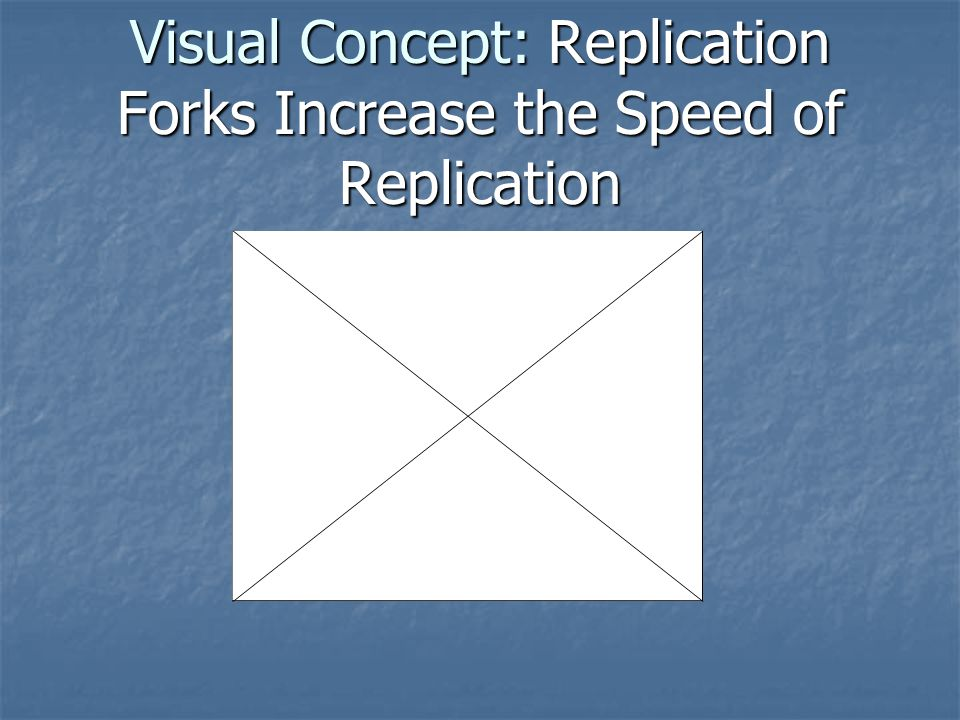 Visual Concept: Replication Forks Increase the Speed of Replication