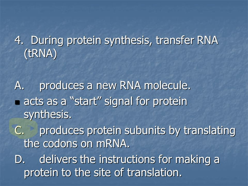 4. During protein synthesis, transfer RNA (tRNA)‏