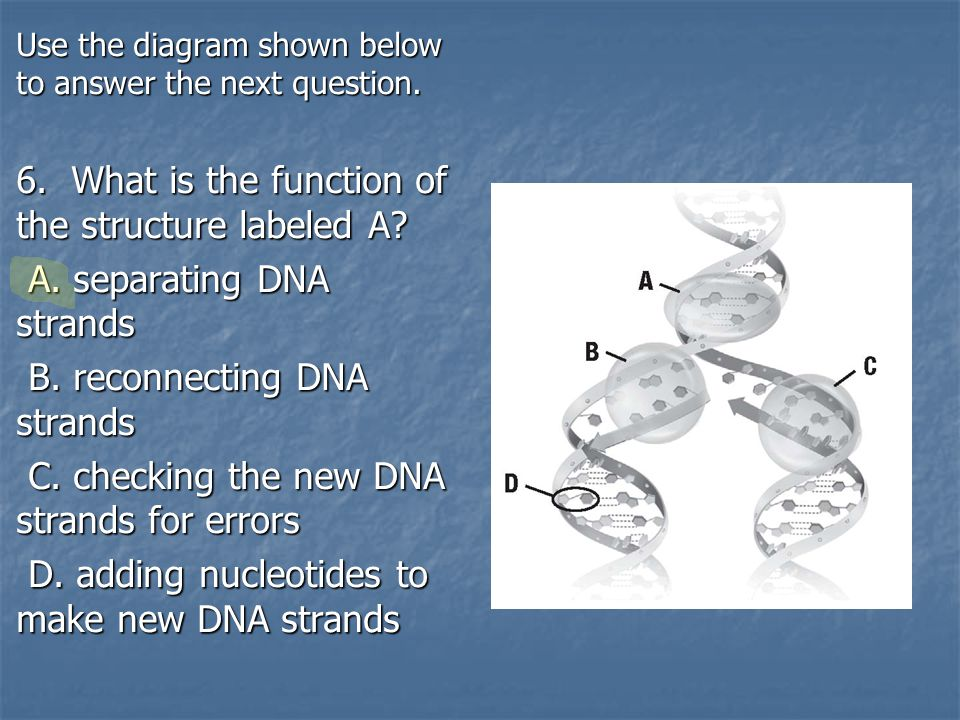 6. What is the function of the structure labeled A