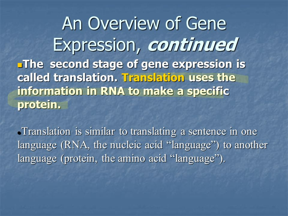 An Overview of Gene Expression, continued